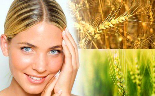 Масло из ростков пшеницы очень полезно